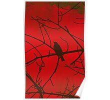 Bird Branches [Red] Poster