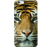 Amur Tiger Eyes iPhone Case/Skin