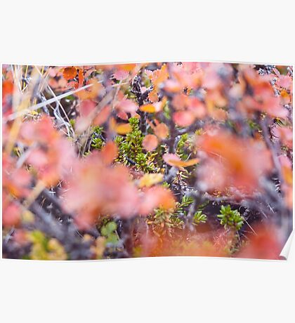 Colorful twigs Poster