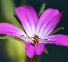 Hoverflies Bottom by relayer51
