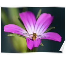 Hoverflies Bottom Poster