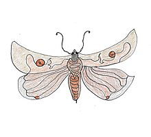 The Endangered Austyn Teal Moth (one-line #123) Photographic Print