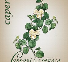 Botanical illustration of Capers by Irisangel