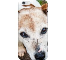 The old Jack Russel  iPhone Case/Skin
