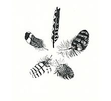 Feathers Number 5 Photographic Print