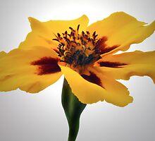 Marigold Portrait. by Terence Davis