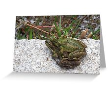 Mating Toads out of water  Greeting Card
