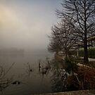 Lake Ginninderra in Canberra/Australia on a foggy morning (2) by Wolf Sverak