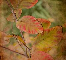 Smoke Bush by Elaine Teague