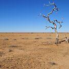Lone tree on the strzelecki track by Bryan Cossart