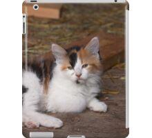 Calico Kitty iPad Case/Skin