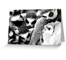 One Eye Open Lemur Greeting Card