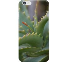 Aloe Vera Leaves  iPhone Case/Skin