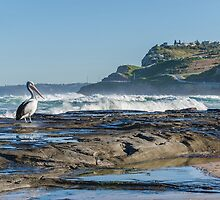 Newcastle Beach and look who dropped in by tuliptimeimages