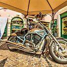 Harley by peaky40