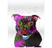 Staffordshire Bull Terrier Pop Art Portrait Poster
