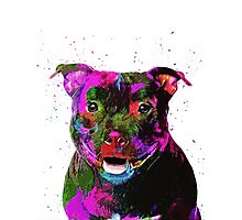 Staffordshire Bull Terrier Pop Art Portrait Photographic Print