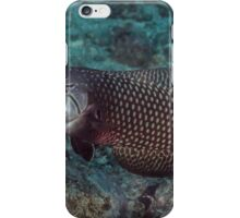 Rockmover Wrasse iPhone Case/Skin