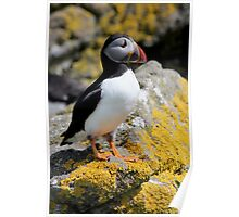 On the Isle of Lunga Poster