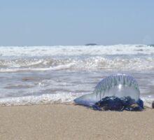 Blue Bottle Jellyfish  Sticker