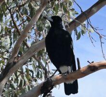 Magpies - Australian Bird Sticker