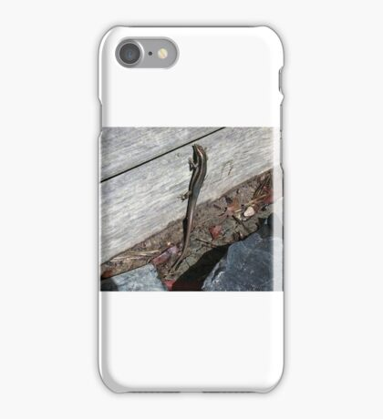 Eastern Water Skink - Blue Mountains iPhone Case/Skin