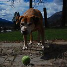 lets play ball by Amanda Huggins