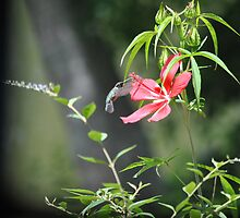 Hummer and the Hibiscus by DottieDees
