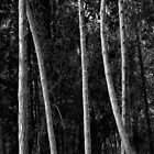 Five Trunks by cclaude