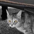 MEEKA B&W with Color Eyes by TJ Baccari Photography