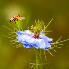 Bee on a wildflower by Delfino