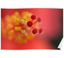 hibiscus, flower, stamen, red, yellow, macro Poster
