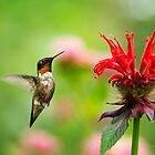 Male Ruby-Throated Hummingbird Hovering Near Flowers  by Christina Rollo