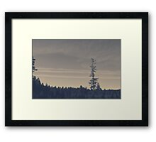 Santiam State Forest Framed Print