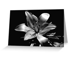 black/white lily Greeting Card