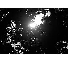 Sunlight black and white Photographic Print
