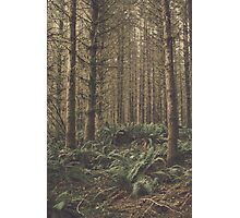 Fern Floor Photographic Print