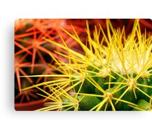 Cacti background Canvas Print