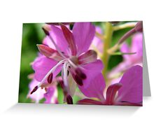 Close-up Willow Herb Greeting Card