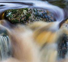 Rainforest Stream. by robsta808