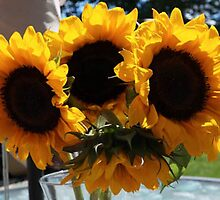 SUNFLOWERS IN NATURAL LIGHT by pjm286