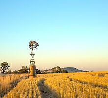 Windmill..... Tall & Proud...  by jenkeating1