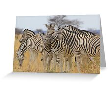 Zebra - African Wildlife Background - Love to Feel Greeting Card