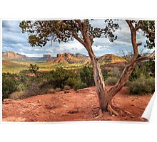 A Tree In Sedona Poster