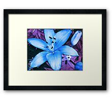 Blue Asiatic Lily Framed Print