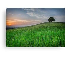 Tuscany Chestnut tree Canvas Print