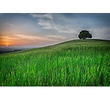 Tuscany Chestnut tree Photographic Print