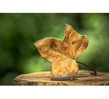 Single Leaf Photographic Print