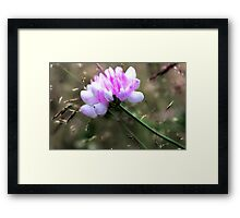 Crown Vetch - In Tall Meadow Grass Framed Print