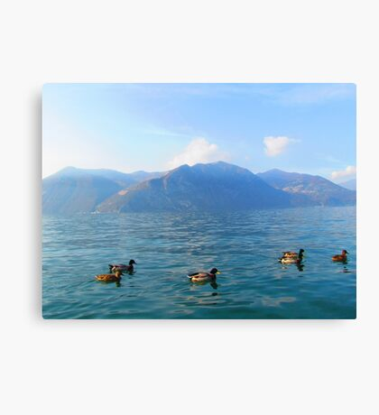 Ducks on a lake in the mountains Canvas Print